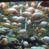 Acvariul și Delfinariul din Constanța, magnet pentru turiști