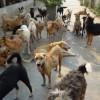 16.000 de câini maidanezi, eutanasiaţi din septembrie 2013