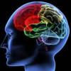 Alergarea influențează structura creierului