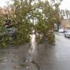 60 de mașini, avariate de copaci doborâți de vânt în Capitală