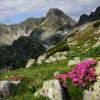 Parcul Național Retezat, un colț de rai vizitat anual de mii de turiști!