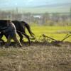 România, liderul UE la ponderea populației în agricultură