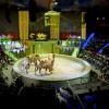 Circul Globus, obligat să plătească aproape un milion de lei!