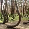 Pădurea Baciu, plină de mistere și legende