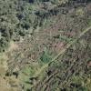 Mii de hectare de pădure, afectate de furtunile din ultima săptămână